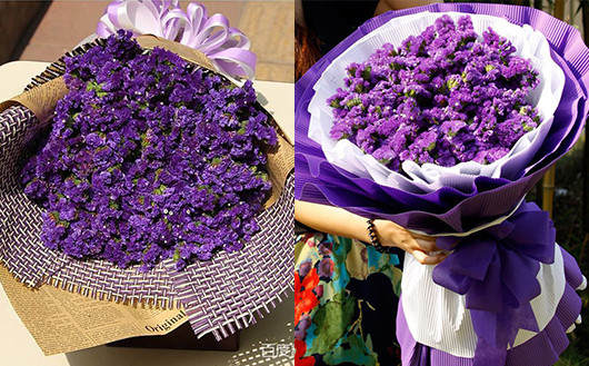 紫色勿忘我老婆花