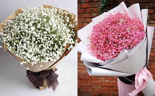 网购花卉哪里最好-满天星礼品
